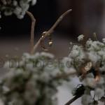 Matrimonio a contatto con la natura. Il Ramo d'oro a Bacoli. L'orologio floreale di Linneo