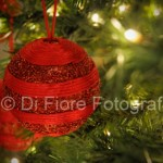 Fotografi Matrimonio Napoli. 8 dicembre festa dell'Immacolata. Avete preparato l'albero di Natale?